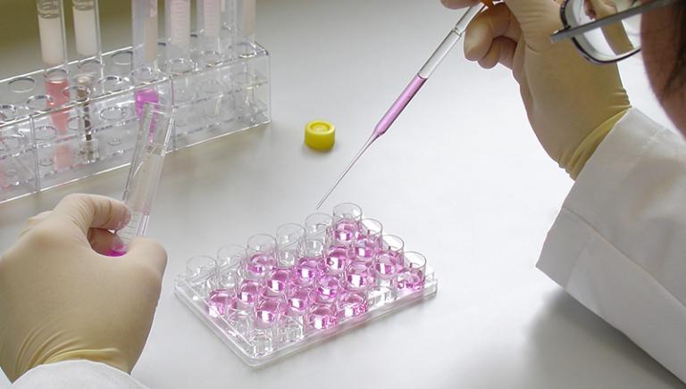 Olanda crea un fondo:obiettivo niente più test sugli animali. L'Italia quando?