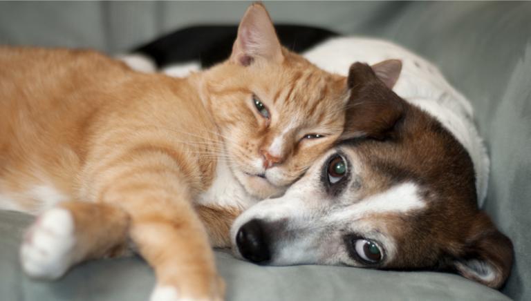 Scongiurato il rischio pignoramento per gli animali da compagnia