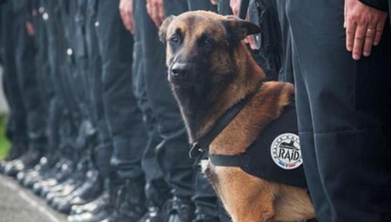 In ricordo di Diesel, uccisa dalla follia umana, adotta anche tu un cane