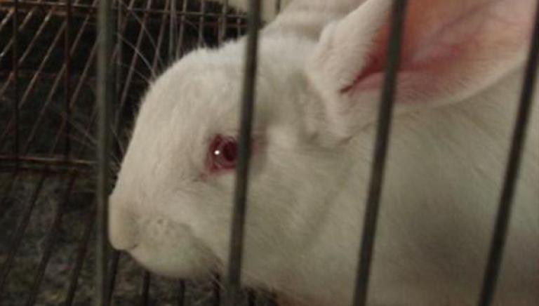 Modena:testa di coniglio lasciata al tavolo LAV. Gesto subito denunciato!
