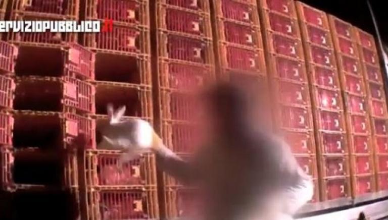 #CORAGGIOCONIGLIO: nuovo video-choc, gli abusi durante il trasporto