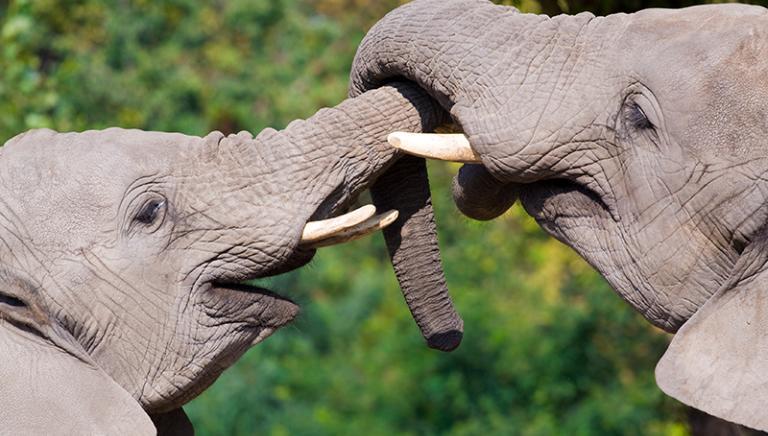 Specie protette: grandi aspettative dalla Conferenza delle Parti, da tutta l'Europa