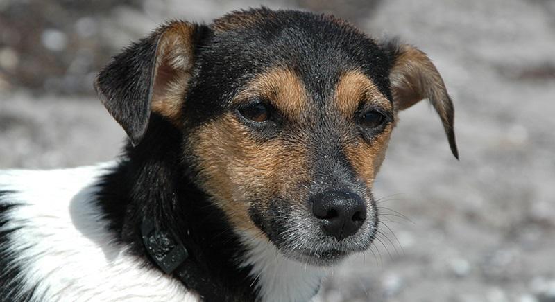 """Irgoli (NU), cane trascinato con auto: no a """"messa alla prova"""", atto va punito"""
