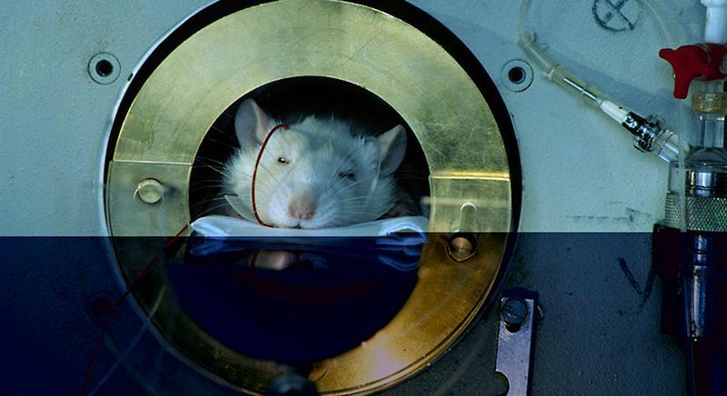 Sperimentazione su animali: nostra replica a Repubblica