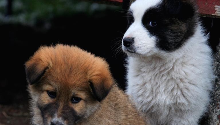 Padova: inizia il maxi processo traffico cuccioli