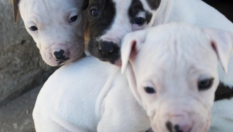 """""""Protect Our Pets"""": Risoluzione del Parlamento UE contro traffico cuccioli"""
