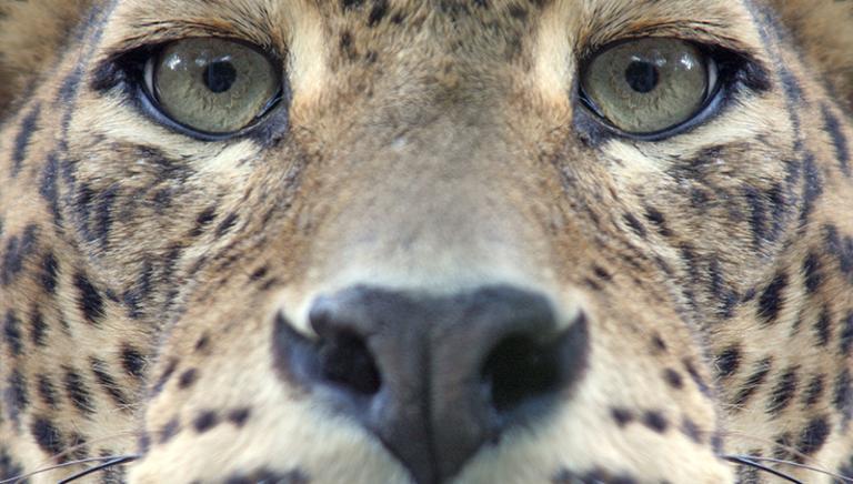 Decreto di chiusura del Ministro dell'Ambiente per il Parco Zoo La Rupe