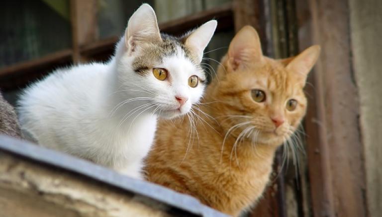 Brescia, investe e uccide due gatti: agricoltore rinviato a giudizio