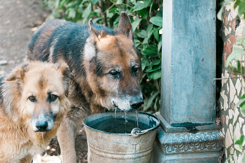 Wolf e Luna hanno una nuova amica. Grazie Camilla!