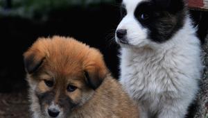 Maxi processo traffico cuccioli a Padova. Costituiti parte civile