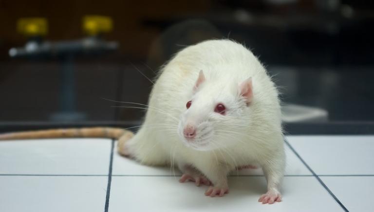 L'Oreal-Unesco premiano ricerca al femminile, ma a spese degli animali