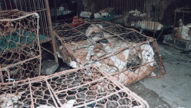Anche quest'anno strage al Festival di Yulin: aiutaci a fermarli