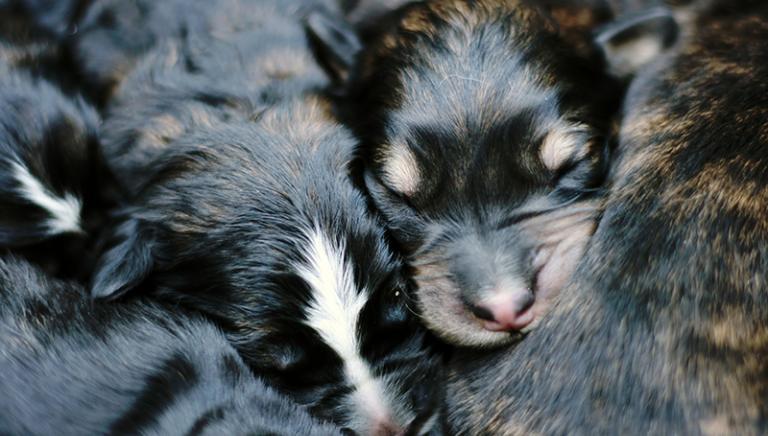 Bruxelles: LAV tra i relatori evento sul traffico cuccioli in Europa