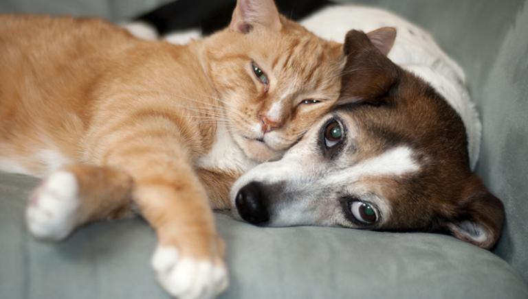 Regione Lombardia: salva la Legge regionale per la tutela di cani&gatti