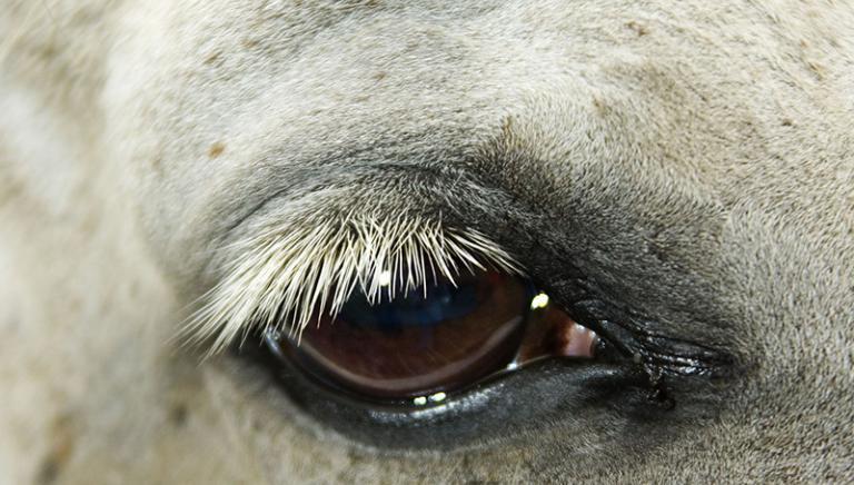 Corse clandestine di cavalli: LAV denuncia due pagine Facebook