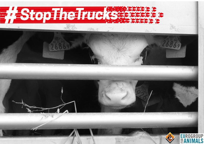 #StopTheTrucks -  Ministro Lorenzin stop ai viaggi della morte. Agisci Ora!