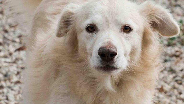 Adozioni di animali adulti: ne parliamo con la Presidente della Camera Boldrini