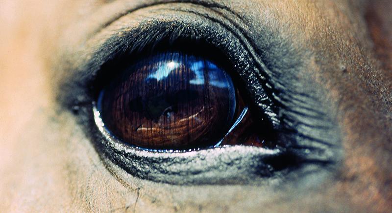 Giostra dell'orso di Pistoia: nostra diffida per fermare la manifestazione