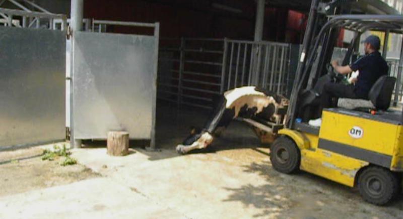 ITALCARNI: prove schiaccianti per veterinari ASL. Rinvio al 21 ottobre