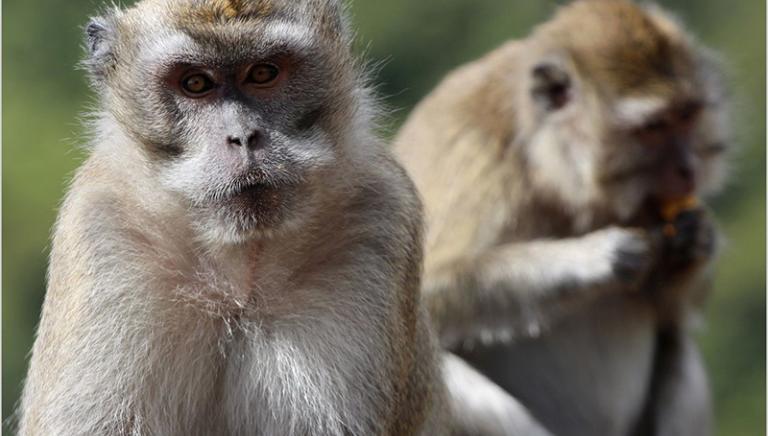Il segreto delle Mauritius? Il traffico internazionale di primati