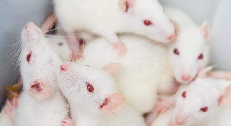 Statistiche test animali: la nostra voce critica