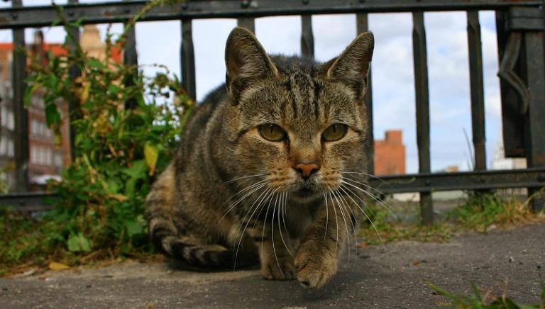 Min. Salute: illegittima cancellazione 56 colonie feline Comune Lucca