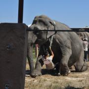 2015 - Elefante