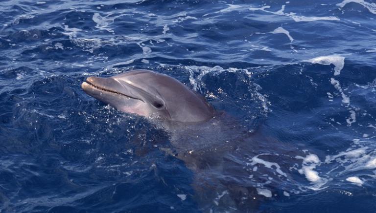 Venezia: evitare contatti con il delfino
