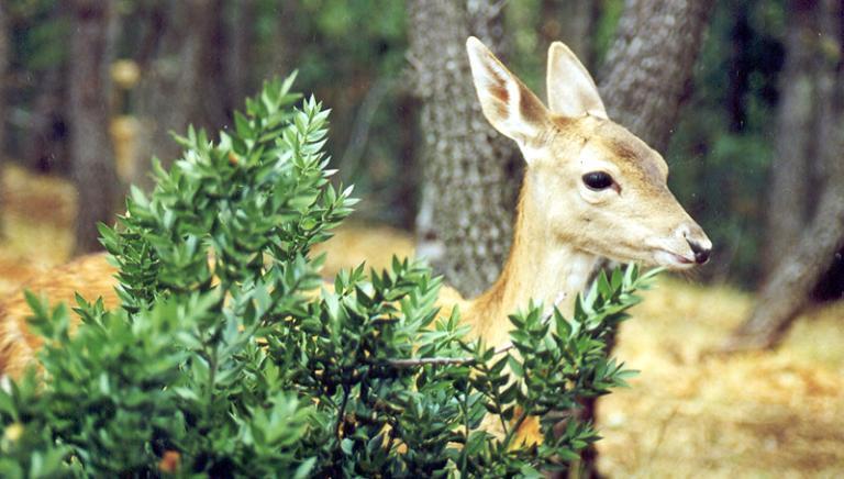 Rischio caccia nei Parchi: al Senato Legge su Aree protette