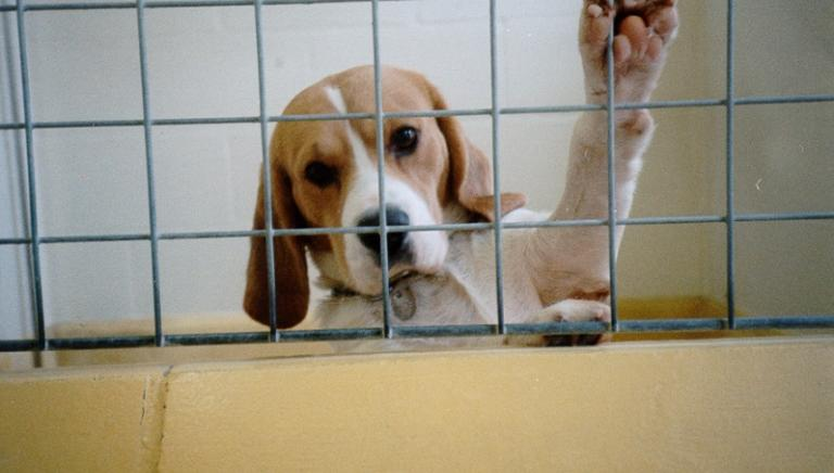 Nuova maratona Telethon: NO a finanziamento dei test su animali!