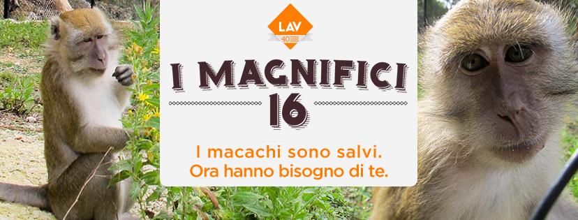 #IMagnifici16 sono liberi dai laboratori e hanno una nuova casa anche on line!
