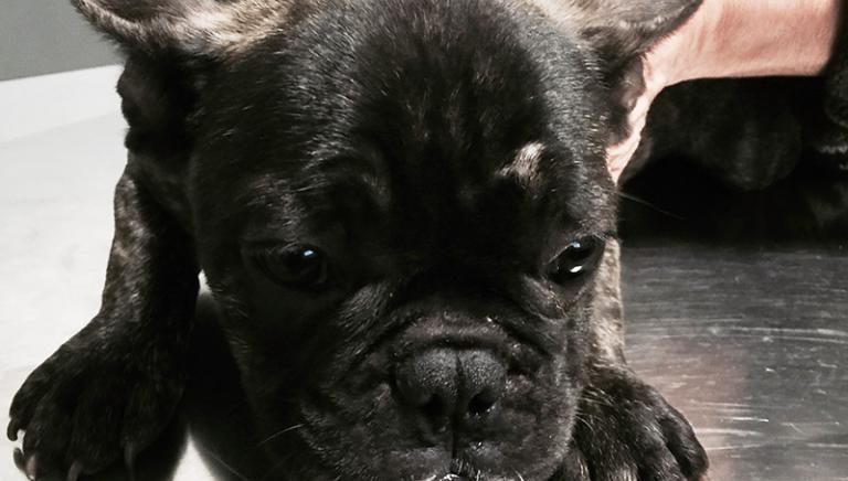 Traffico cuccioli: Tribunale Verona condanna due uomini e confisca i cani