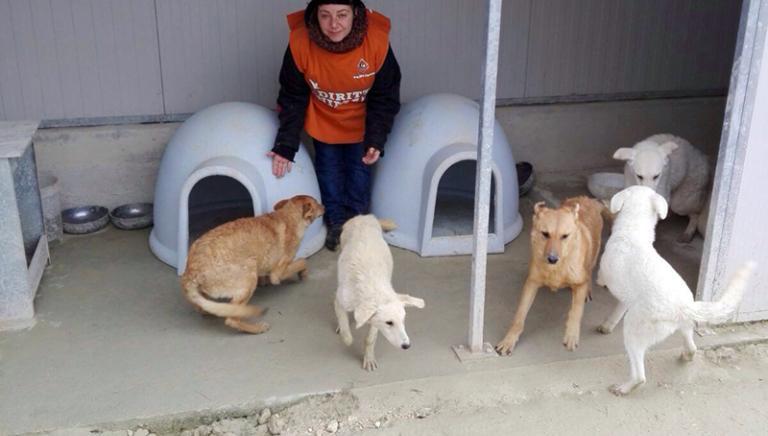 Maltempo in Puglia: LAV e Comune Taranto insieme per i canili