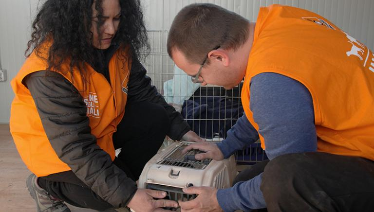 Pronto Campo per le sterilizzazioni dei gatti nelle zone del sisma. Si inizia!
