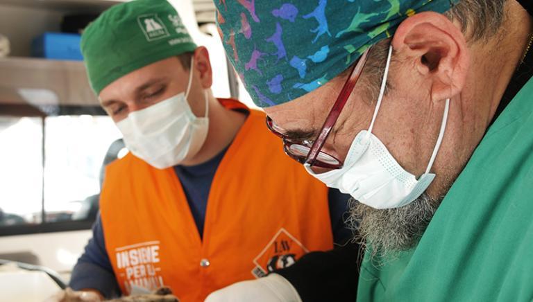 Sul campo per loro: 2° giorno di sterilizzazione gatti nelle zone del sisma