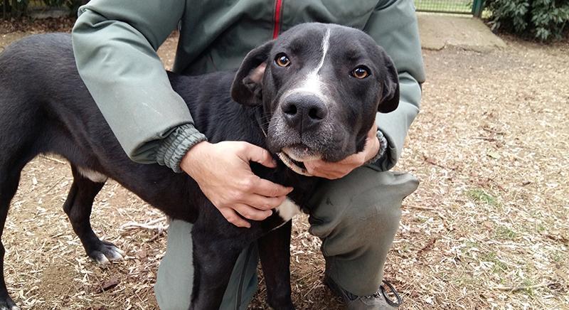 Salvati due cani maltrattati e tenuti a catena. Ora Peter cerca casa