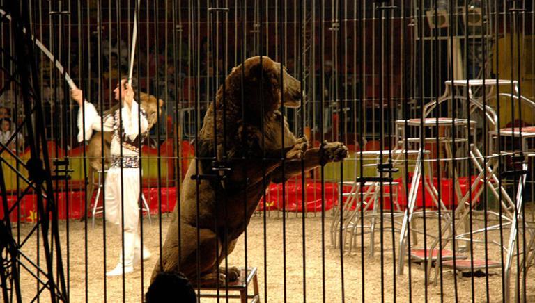 Circo senza animali:verso la nuova Legge. Oggi il confronto in Senato
