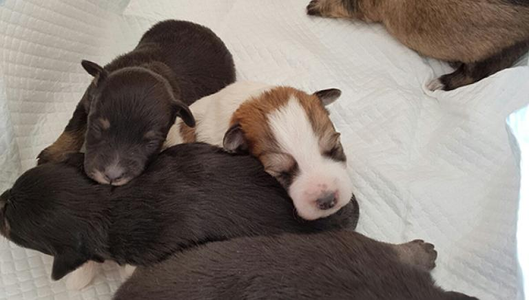 Emergenza terremoto: 5 cuccioli abbandonati cercano casa