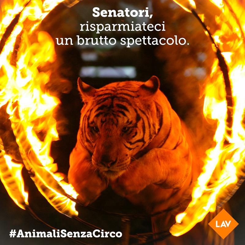 Senatori boccino emendamento che mantiene animali negli spettacoli! #ANIMALISENZACIRCO