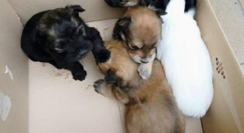 Assessore lascia 4 cuccioli di cane davanti a una villa. LAV esterrefatta: sia punito.