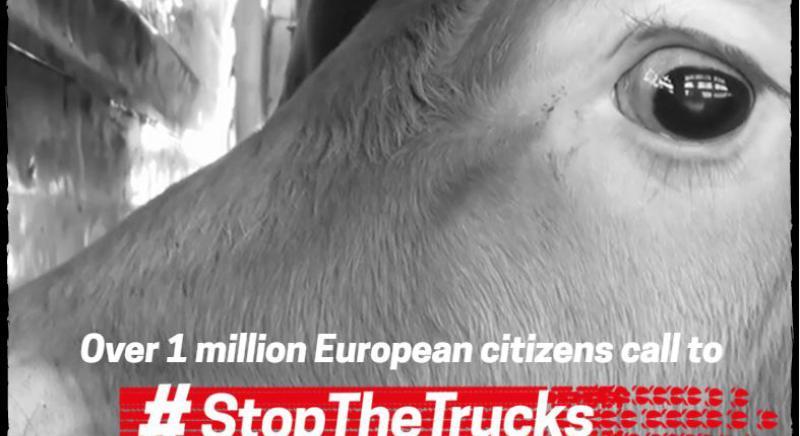 #STOPTHETRUCKS: oltre 1 milione di firme per chiedere la fine di trasporto di animali vivi