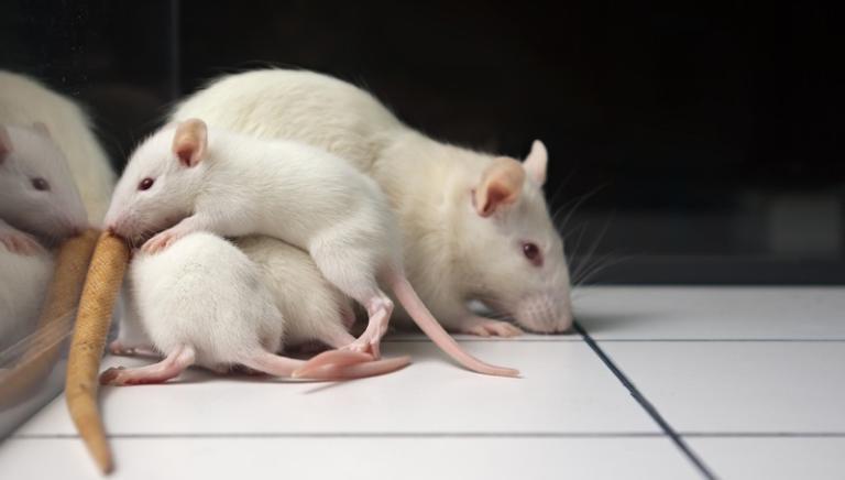 Appello a Nestlè: stop ai test animali per il botox