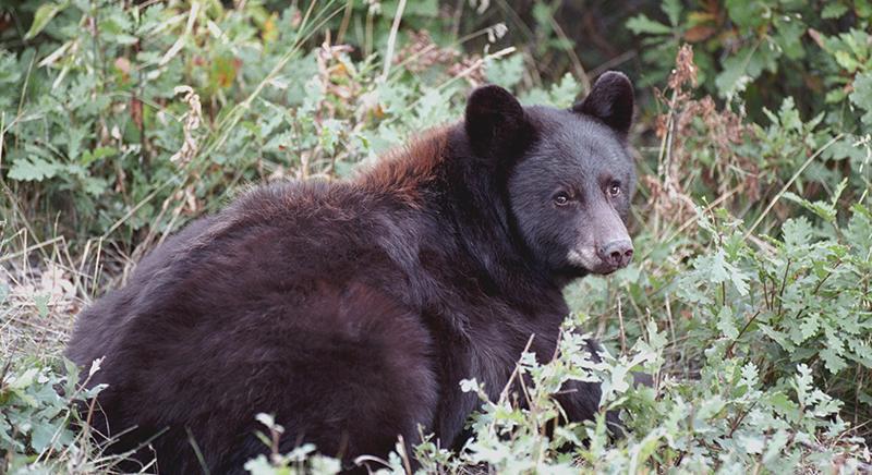 Trento firma ordinanza anti-orso: ergastolo o uccisione. Verdetto indegno