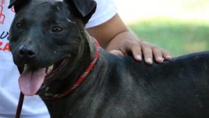 La rinascita di Bruno, pronto per una nuova vita in famiglia. Vuoi adottarlo?