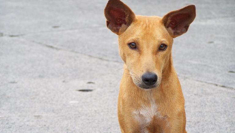 Vittoria! Fermata depenalizzazione occulta dei reati contro animali
