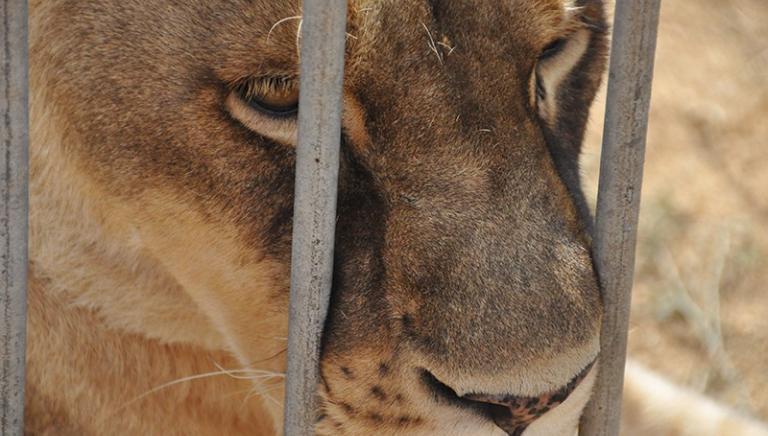 Lion Ark a Festambiente (GR) sabato 5 agosto ore 20.30