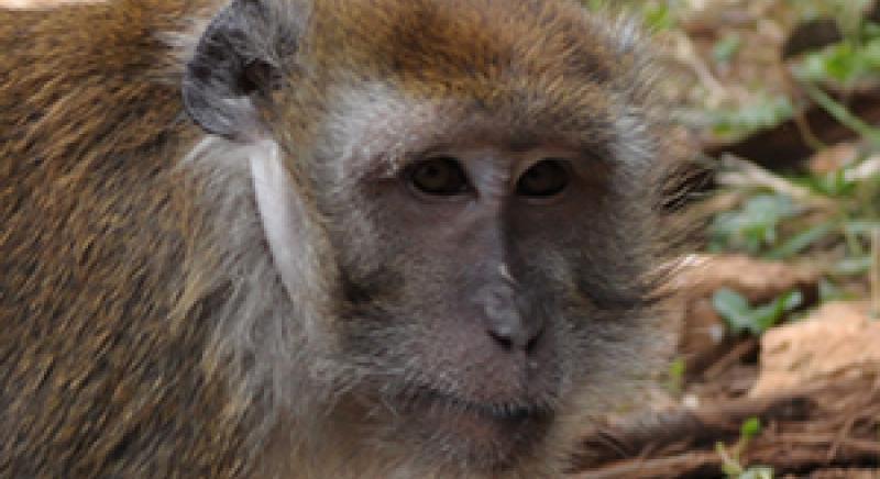 LAV al Congresso internazionale di primatologia EFP2017