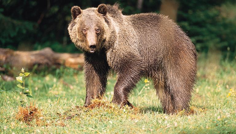 Trento e Bolzano chiedono gestione animali senza controllo statale.Governo dica NO!