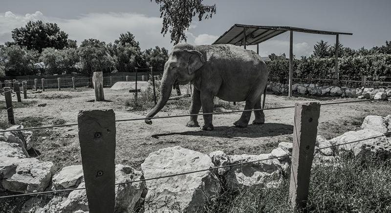 Rapporto ZOO. Indagine del 2015 sulla gestione degli animali