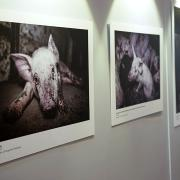 #ENDPIGPAIN - Presentazione Mostra Fotografica e VR investigazioni LAV